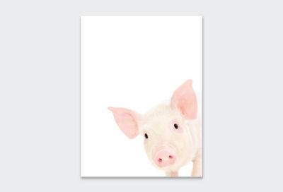 farm-animal-3