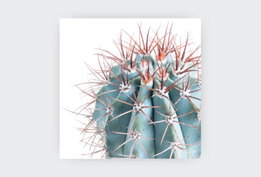 COLLECTION-OF-SUCCULENTS-1