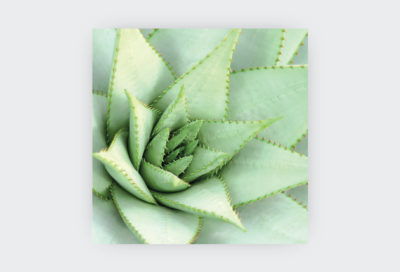 COLLECTION-OF-SUCCULENTS-9