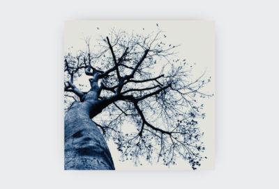 OLD-BLUE-TREE