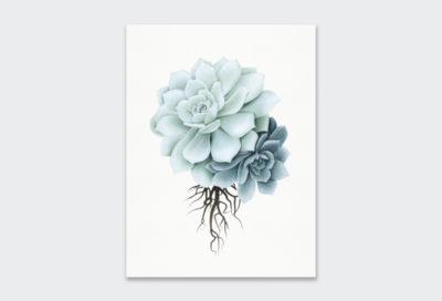 Sketch-Rock-Rose